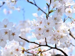 *美未*(angel-live)プロフィール写真